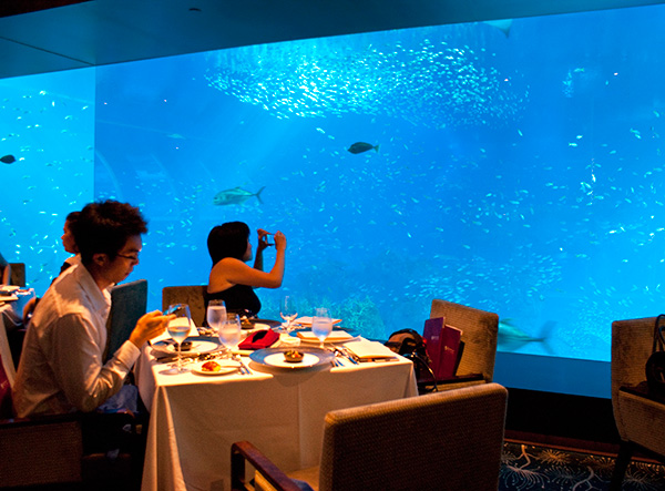Dining with the fishes - stunning view of the aquarium in Ocean Restaurant.