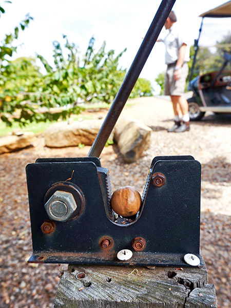 The traditional crank to open a macadamia nut.